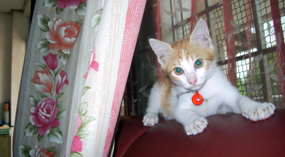 a kittypoo